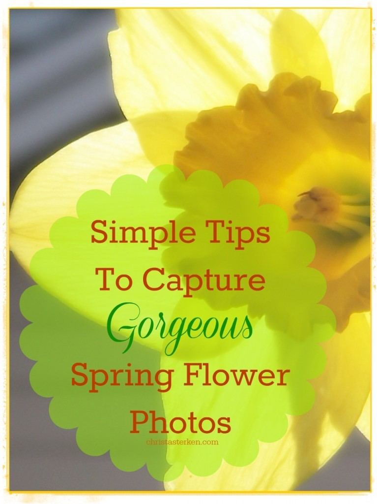 Simple Tips For Better Spring Photos