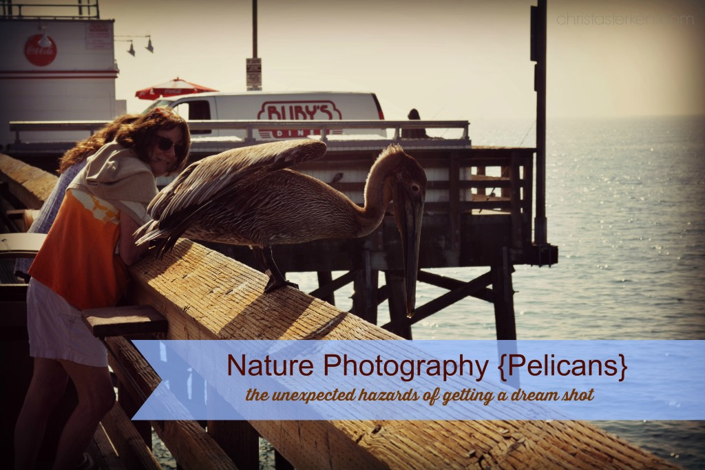 Nature Photography {Pelicans}