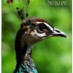 Photography {Amazing Zoo Animal Closeups}